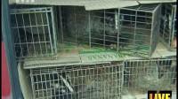 陕西西安:车停应急车道 后备箱竟有活物 都市热线 170905