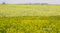 纪度护肤产地济州岛的田园风光