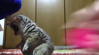 幽默搞笑猫咪视频第七百六十期
