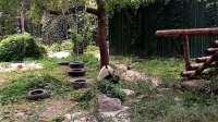 V大熊猫70909-115226