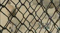 北京大兴野生动物园之四:乘坐铁笼车与动物互动