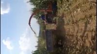 远大农牧玉米秸秆收割机视频 青储机作业视频