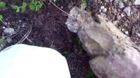 男子发现石头上有个奇怪的突起,敲开之后乐坏了