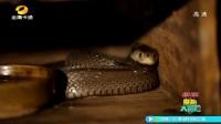 童趣大冒险20171015期:毒蛇入侵之谜