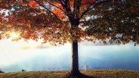 aaanr.com_Us9p3L_Tree_Pond_4K_Living_Background