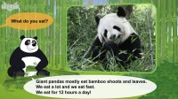 Meet the Animals 26- Giant Panda
