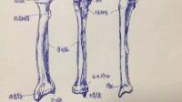 珠海美女医生手绘人体解剖图,惊艳了整个珠海