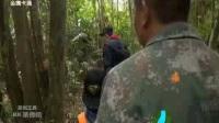 童趣大冒险20180211精彩预告:探秘雨林神秘酸蜂
