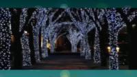【二胡之家】二胡獨奏(33)美女二胡獨奏為了誰趙寒陽二胡教學視頻迅雷下載
