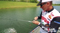 How to Catch More Bass with Buzz Toads