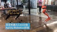 机器人魔性尬舞,双足与四足谁更赞