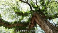 让每一片叶子都绚丽多彩�D�D青塘中心小学义务教育均衡发展纪实