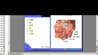 课时29  人体解剖学