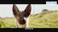 《一条狗的使命》中文预告 萌犬治愈人心