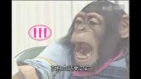 大猩猩和萌狗去医院抽血体检,太搞笑了,超级可爱。