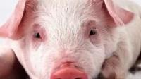 我在儿童的动物声音 (20 惊人的动物)-动物儿童电视截了一段小视频