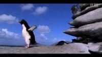 你知道在南极当一只企鹅有多难吗?