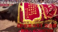《黔东南斗牛》交流群473097106