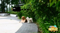 路边遇到弃养的狗狗你会怎么做?
