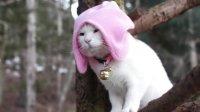可爱猫猫图片