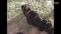 可爱的小熊排队