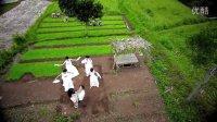 『印尼』Anang Ashanty - Sumpah Mati