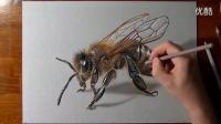 意大利立体画家 彩色铅笔手绘 一只大黄蜂画 高清写实