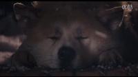 小贱【一起看#1】忠犬八公的故事