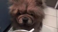 [优酷美食节]诱人的鸡肉土豆沙拉 把馋狗狗都引来啦!