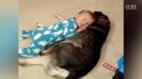 犯困婴儿拥抱狗狗睡觉