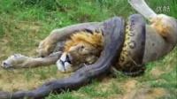 【wo1jia2】10大最疯狂的动物打斗镜头捕捉 最惊人的野生动物的袭击