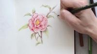 彩铅花卉3-山茶花