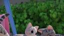 甜甜私房猫 吃饱饱大冒险 26话 chi~成为朋友