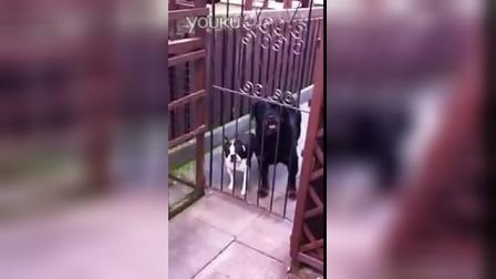 这狗狗居然在说hello?
