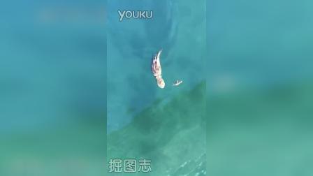 实拍章鱼捕捉螃蟹全过程